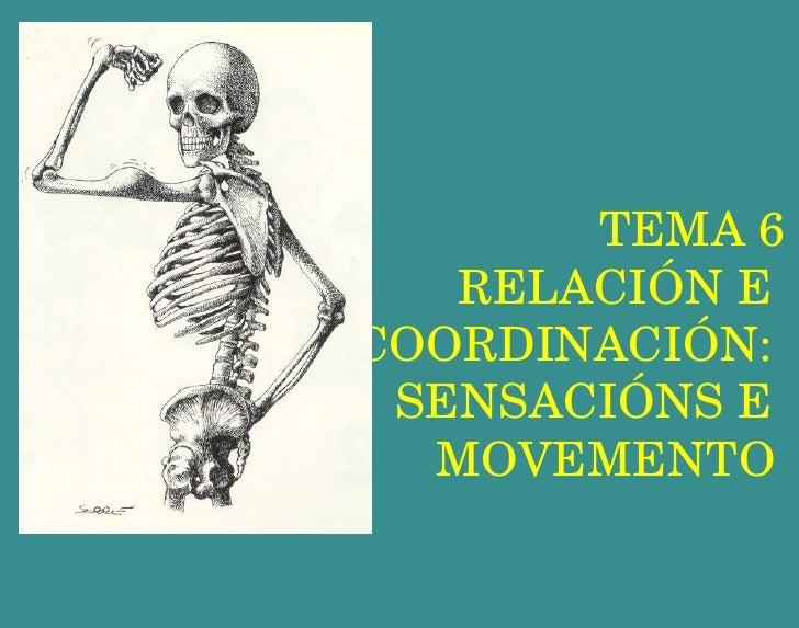 TEMA 6 RELACIÓN E  COORDINACIÓN:  SENSACIÓNS E  MOVEMENTO