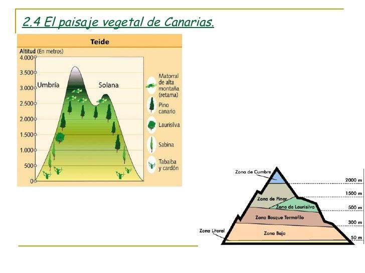 Los paisajes vegetales espa oles for Pisos de vegetacion canarias