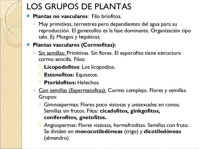 musgo planta no vascular 31 hepáticas planta no vascular licopodios