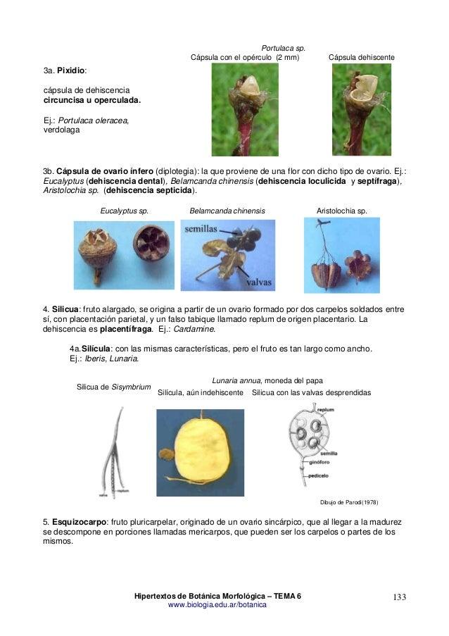 Morfologia De Las Plantas Vasculares