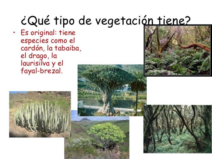 ¿Qué tipo de vegetación tiene?• Es original: tiene  especies como el  cardón, la tabaiba,  el drago, la  laurisilva y el  ...