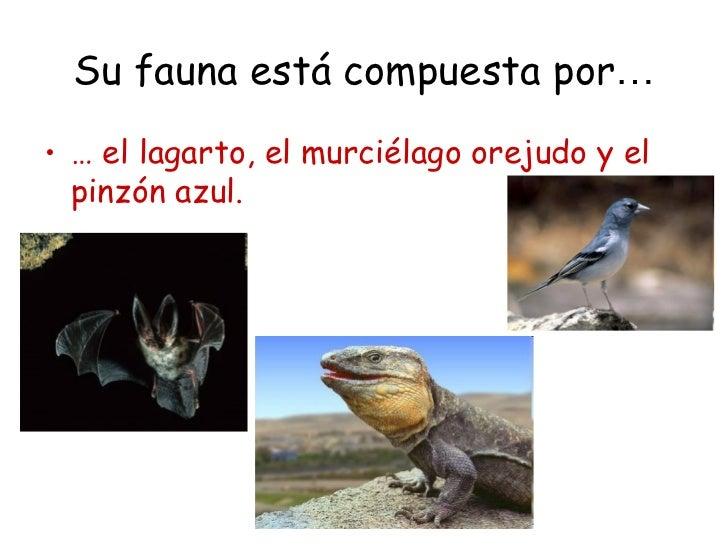 Su fauna está compuesta por…• … el lagarto, el murciélago orejudo y el  pinzón azul.