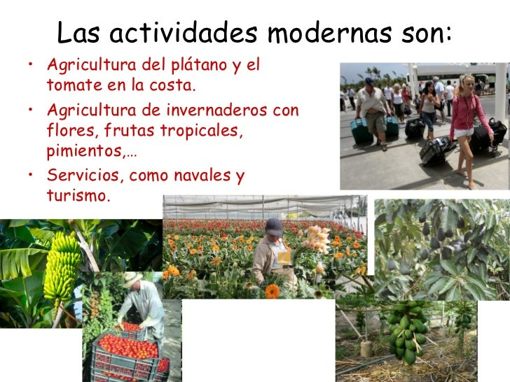 Las actividades modernas son:• Agricultura del plátano y el  tomate en la costa.• Agricultura de invernaderos con  flores,...