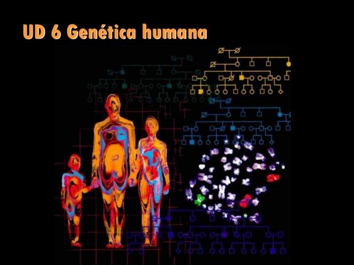 UD 6 Genética humana