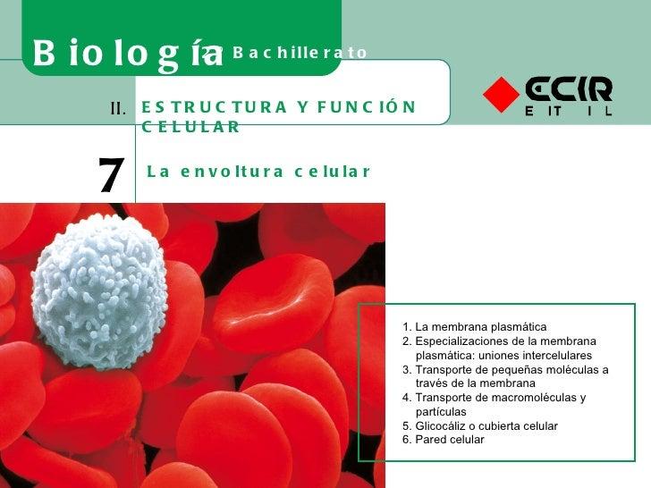 ESTRUCTURA Y FUNCIÓN CELULAR II. 7 La envoltura celular Biología 2º Bachillerato 1. La membrana plasmática 2. Especializac...