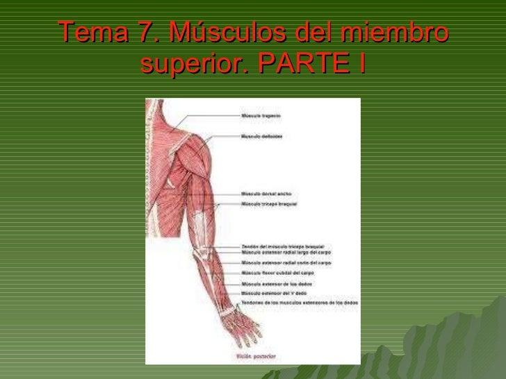 Tema 7. Músculos del miembro superior. PARTE I