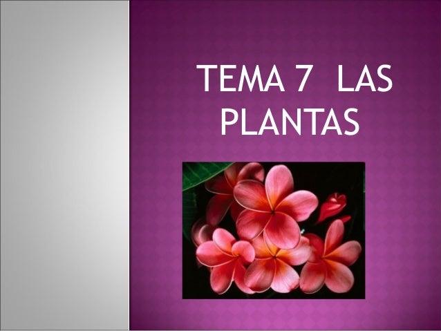 TEMA 7 LAS PLANTAS
