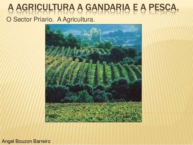 A AGRICULTURA A GANDARIA E A PESCA. O Sector Priario. A Agricultura.Angel Bouzon Barreiro