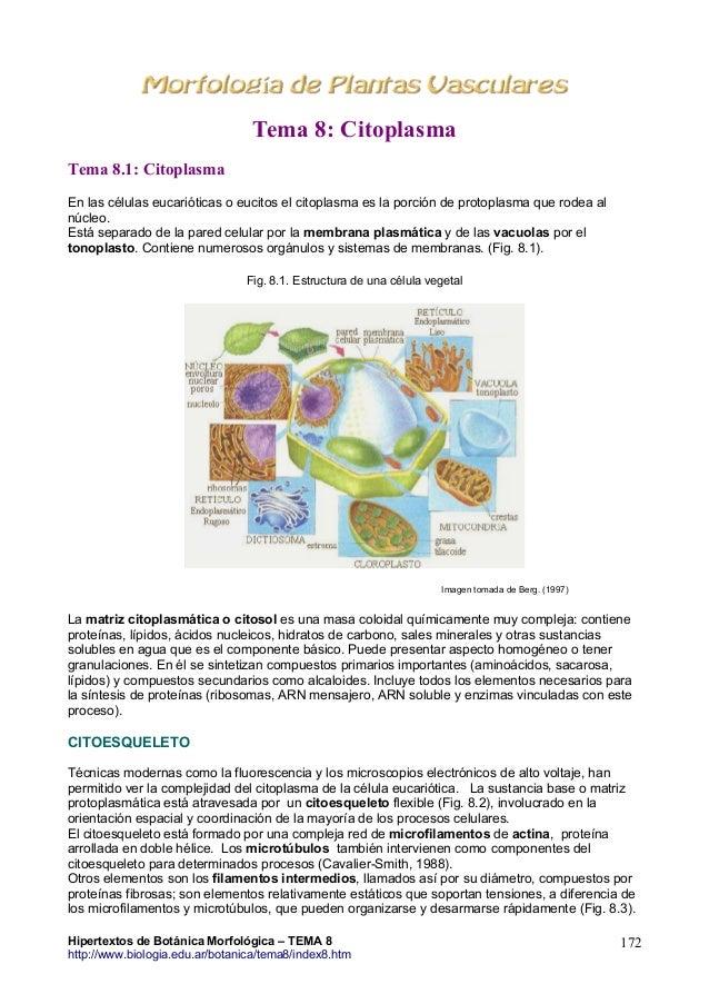 Tema8 Citoplasma Hipertextos De Botánica Morfológica Www