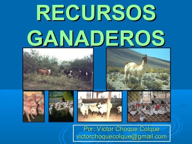 RECURSOSRECURSOSGANADEROSGANADEROSPor: Víctor Choque ColquePor: Víctor Choque Colquevictorchoquecolque@gmail.comvictorchoq...