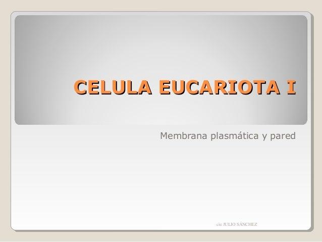 CELULA EUCARIOTA I Membrana plasmática y pared  cic JULIO SÁNCHEZ