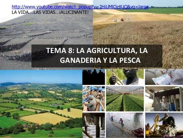 TEMA 8: LA AGRICULTURA, LA GANADERIA Y LA PESCA http://www.youtube.com/watch_popup?v=2HiUMlOz4UQ&vq=large LA VIDA….LAS VID...