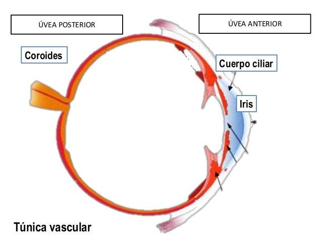 posterior uveitis