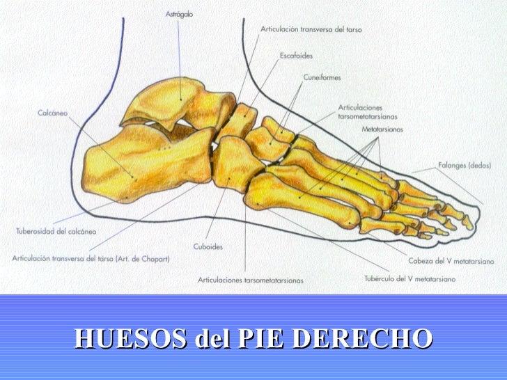 Varikoz de las dos extremidades inferiores se ha roto de repente el nudo varicoso