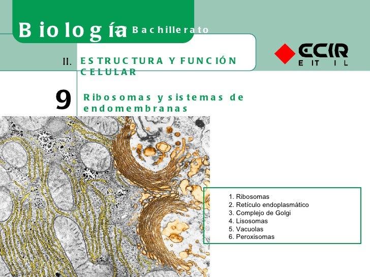 ESTRUCTURA Y FUNCIÓN CELULAR II. 9 Ribosomas y sistemas de endomembranas Biología 2º Bachillerato 1. Ribosomas 2. Retículo...
