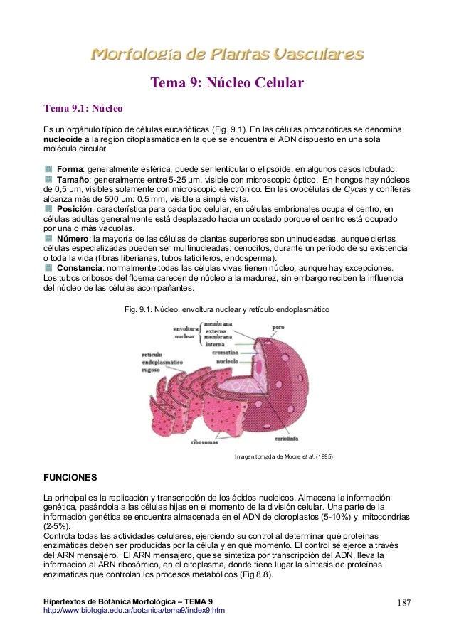 Tema 9: Núcleo Celular Tema 9.1: Núcleo Es un orgánulo típico de células eucarióticas (Fig. 9.1). En las células procariót...