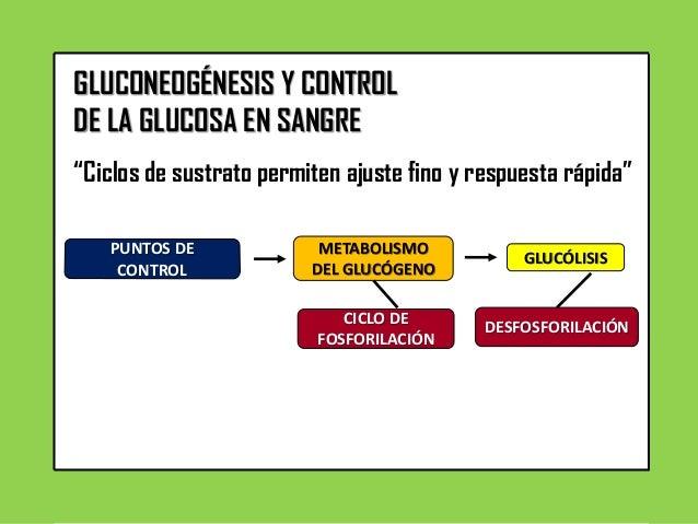 GLUCOGÉNESIS Y CONTROL DE LA GLUCOSA EN SANGRE
