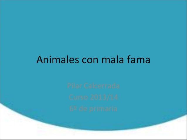 Animales con mala fama Pilar Calcerrada Curso 2013/14 6º de primaria