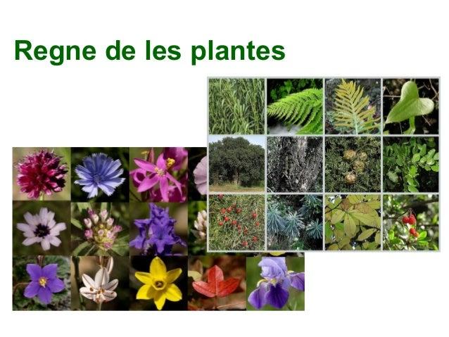 Regne de les plantes