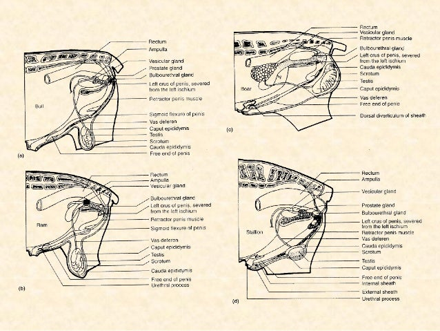 Tema ii. sistema reproductor