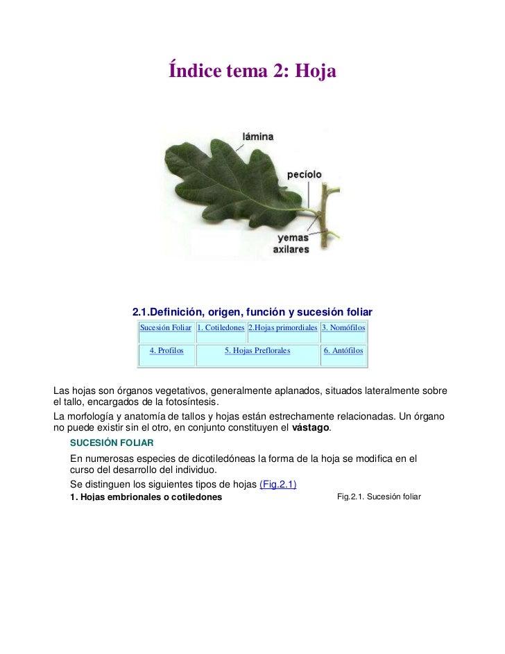 Atractivo Anatomía De Las Plantas Vasculares Bandera - Anatomía de ...