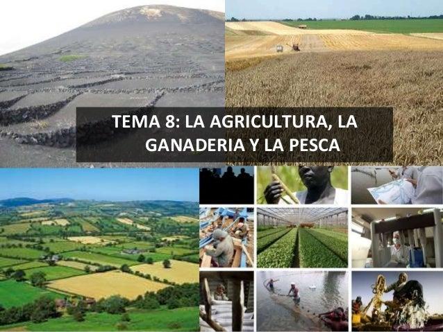 TEMA 8: LA AGRICULTURA, LA GANADERIA Y LA PESCA 1