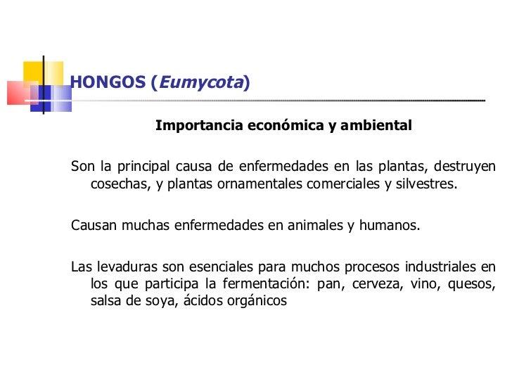 Hongos for Importancia de las plantas ornamentales