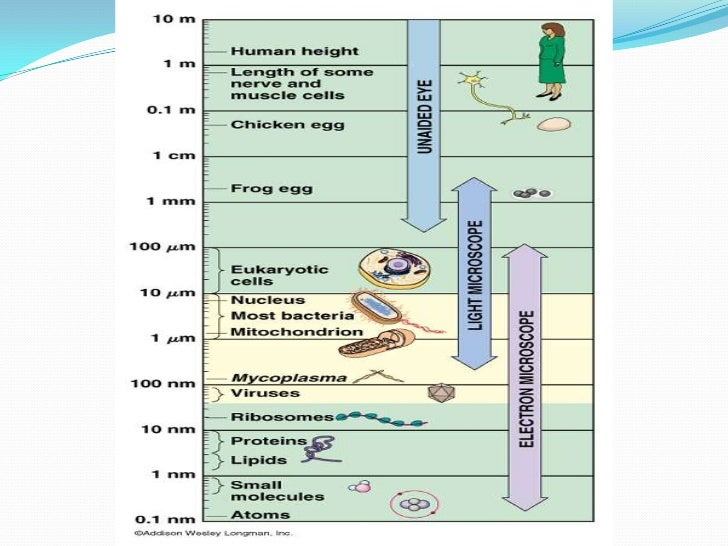 types of electron microscope pdf