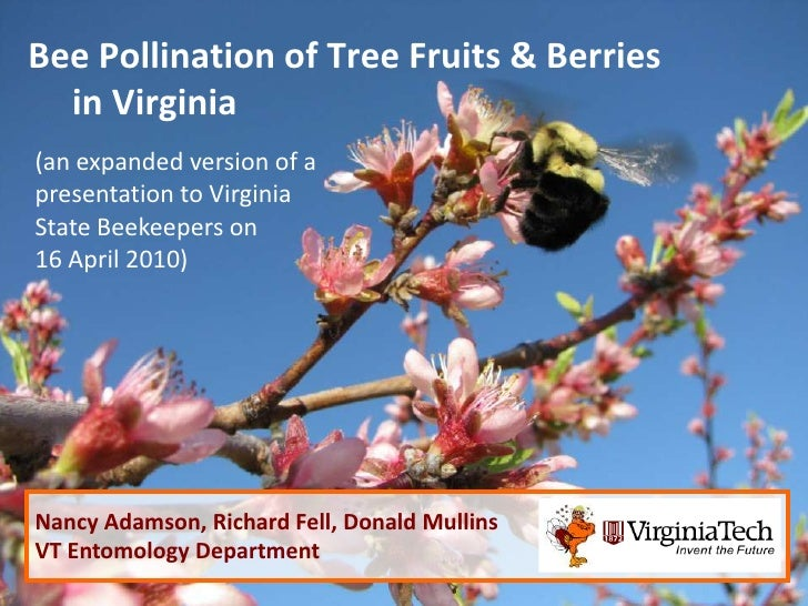 Bee Pollination of Tree Fruits & Berries  in Virginia(an expanded version of apresentation to VirginiaState Beekeepers on1...