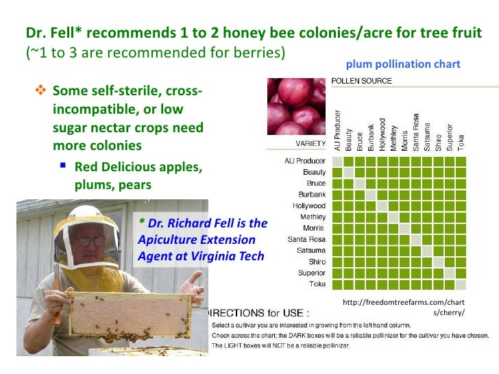 Dr. Fell* recommends 1 to 2 honey bee colonies/acre for tree fruit(~1 to 3 are recommended for berries)                   ...