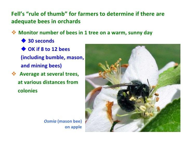 """Fell's """"rule of thumb"""" for farmers to determine if there areadequate bees in orchards Monitor number of bees in 1 tree on..."""