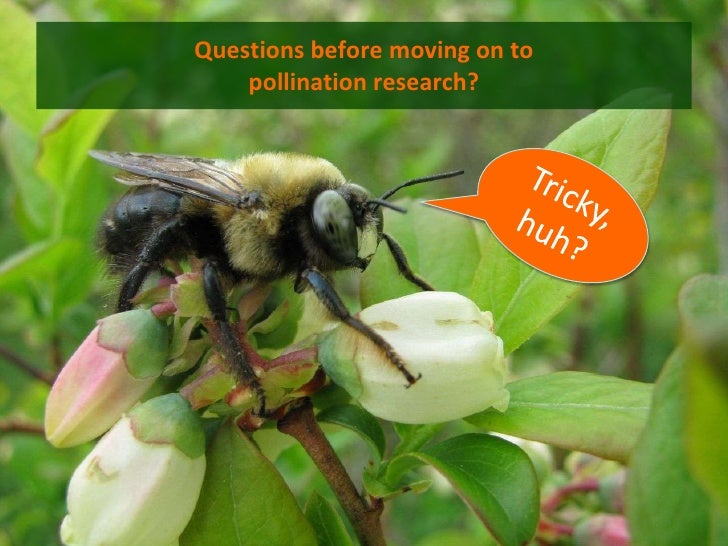 Questions before moving on to    pollination research?
