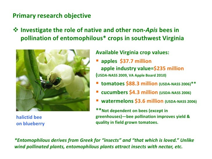 Primary research objective Investigate the role of native and other non-Apis bees in  pollination of entomophilous* crops...