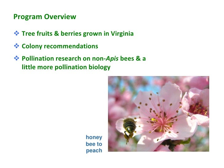 Program Overview Tree fruits & berries grown in Virginia Colony recommendations Pollination research on non-Apis bees &...