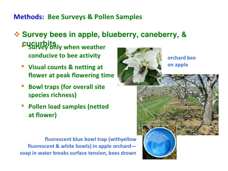 Methods: Bee Surveys & Pollen Samples Survey bees in apple, blueberry, caneberry, &  cucurbits • Survey only when weather...