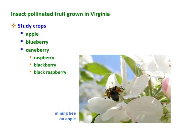 Insect pollinated fruit grown in Virginia Study crops    apple    blueberry    caneberry       • raspberry       • bla...