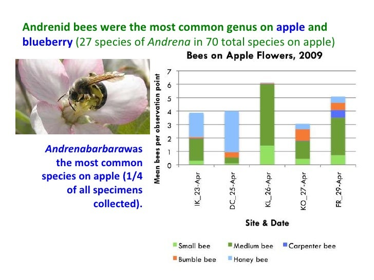 Andrenid bees were the most common genus on apple andblueberry (27 species of Andrena in 70 total species on apple)    And...