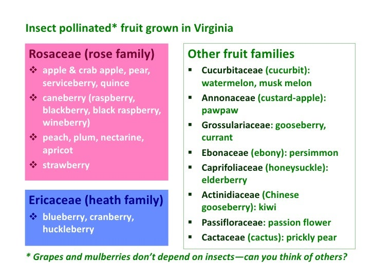 Insect pollinated* fruit grown in VirginiaRosaceae (rose family)              Other fruit families apple & crab apple, pe...