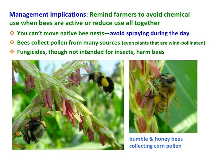 Management Implications: Remind farmers to avoid chemicaluse when bees are active or reduce use all together You can't mo...