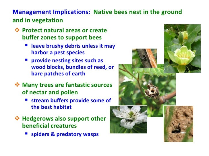Management Implications: Native bees nest in the groundand in vegetation  Protect natural areas or create   buffer zones ...