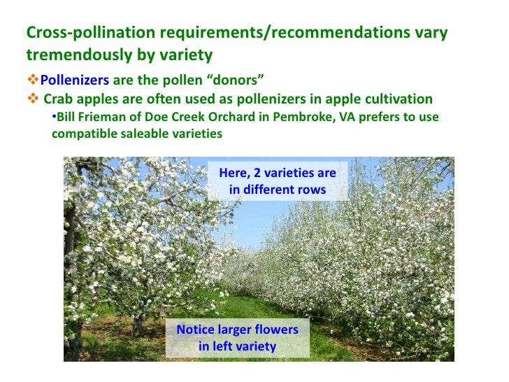 """Cross-pollination requirements/recommendations varytremendously by varietyPollenizers are the pollen """"donors"""" Crab apple..."""