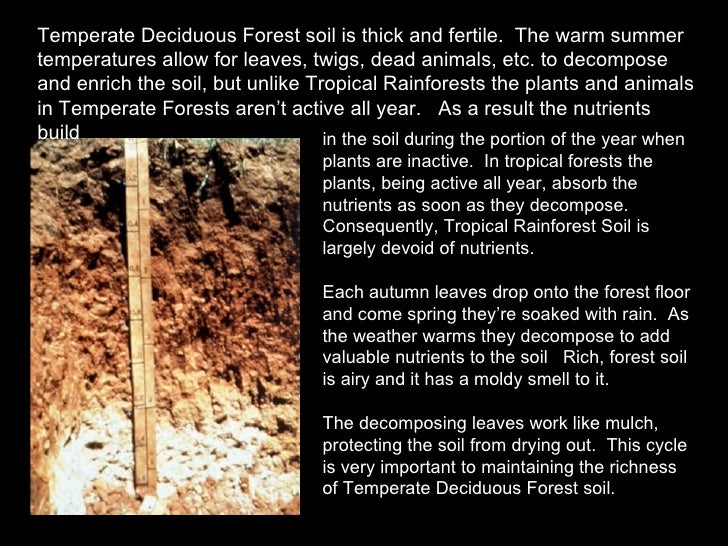 an analysis of temperate deciduous forest Immediately download the deciduous summary, chapter-by-chapter analysis, book notes, essays, quotes, character descriptions, lesson plans, and more - everything you need for studying or teaching deciduous.
