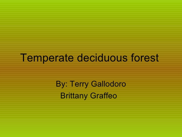 Temperate deciduous forest  By: Terry Gallodoro Brittany Graffeo