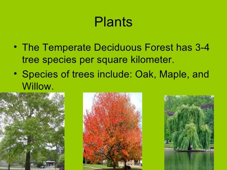 temperate forest biome essay Temperate dedicuous forest geography:  biome flashcards temperate dedicuous forest  let us do your essay for you .