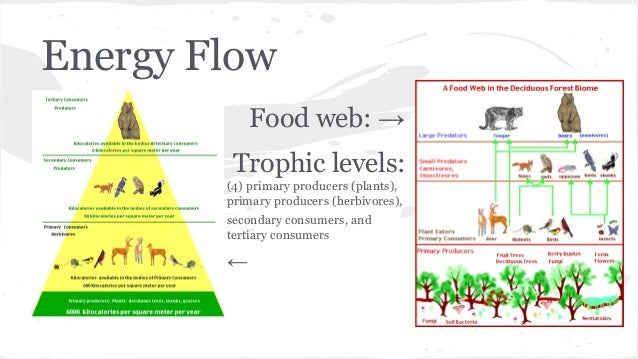 New Zealand Temperate Rainforest Food Web