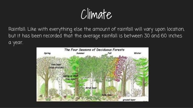deciduous forest average precipitation