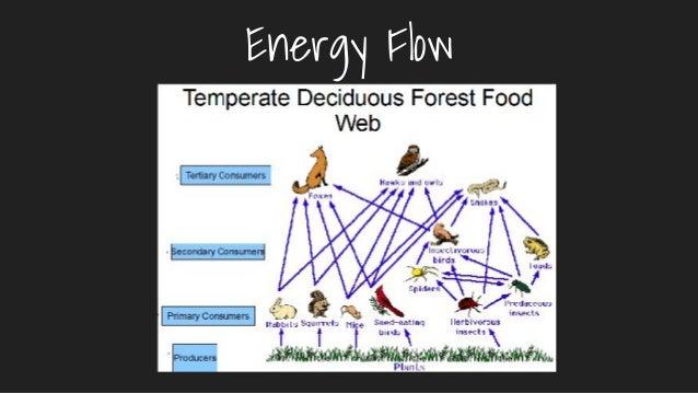 Temperate Deciduous Forest Period 4