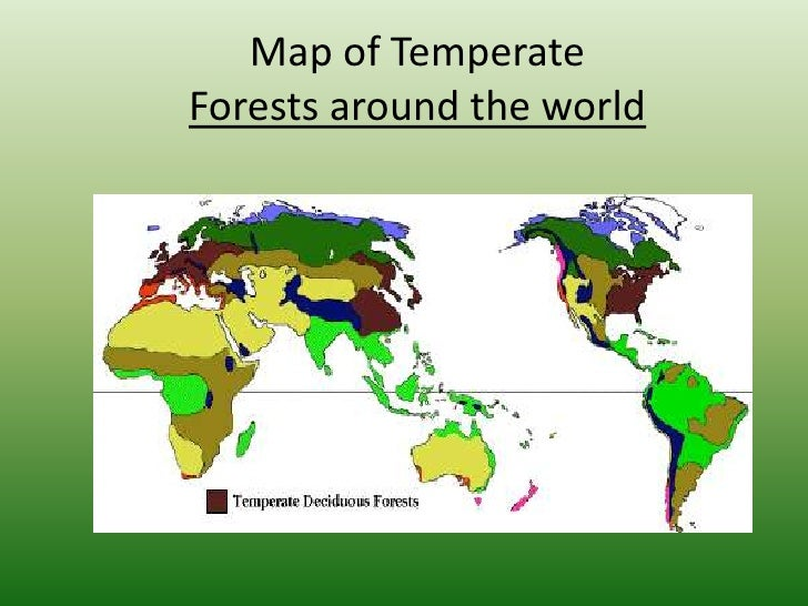 Temperate forest power point 4 map of temperate forests gumiabroncs Images