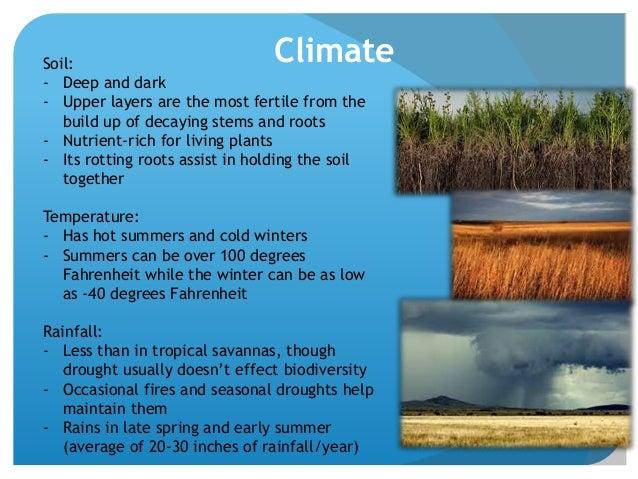 average temperature in a temperate grassland