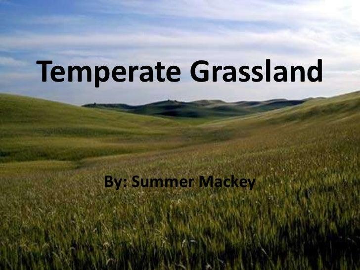 Temperate Grassland<br />By: Summer Mackey<br />